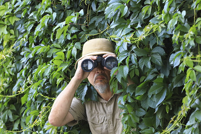 Bearded man looking through binoculars while hiding in bushes