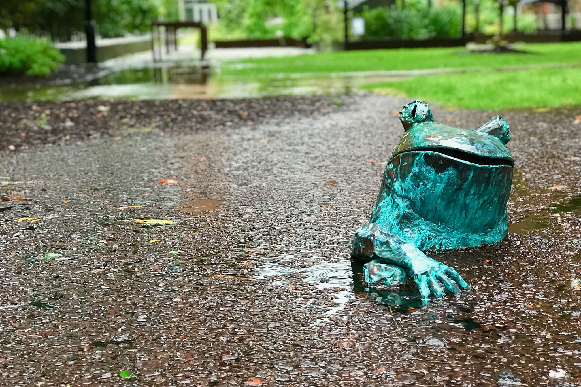 Statue of frog in floodwaters at MUSC